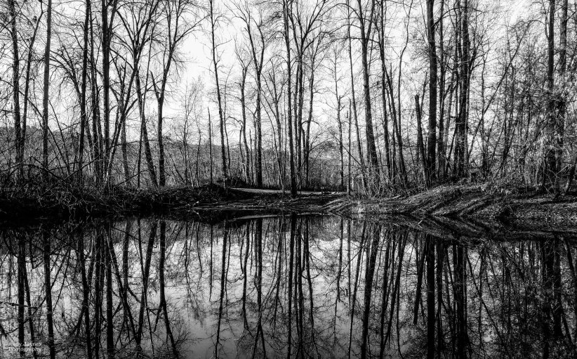 Blackbird Island Reflections, black & white - 2017