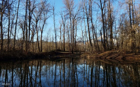 March - Blackbird Island Reflections