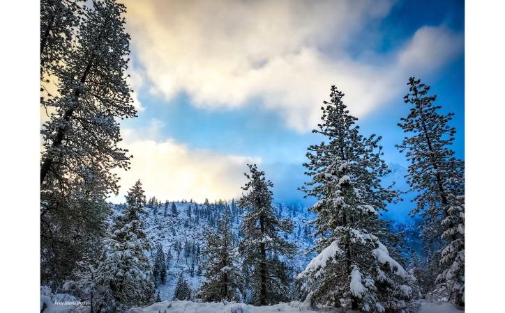 Early Dec Snowy Trees - Dec 2019