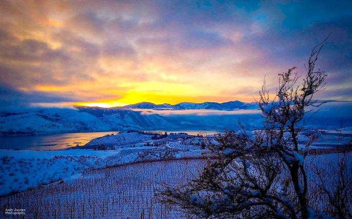 Lake Chelan Sunset and Tree - 2017