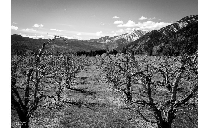Leavenworth Orchards in Black and White - 2018