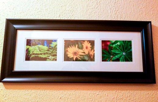 Set of 3 Close-Up Plants, 5x7 prints, white matte, black frame - 2014-2016