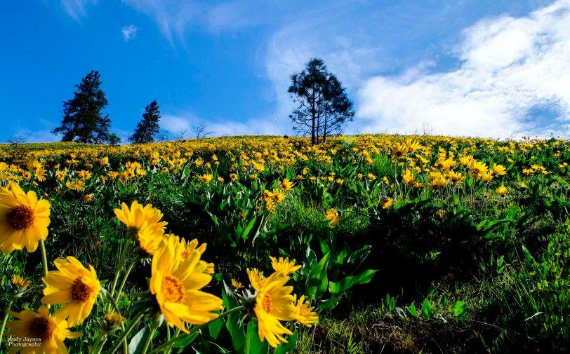 May - Flowers Everywhere