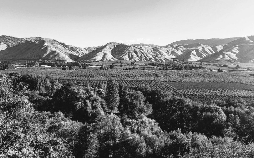 Orchards of Cashmere Black & White - 2018