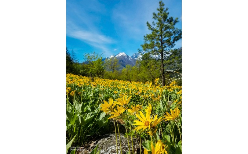Spring Bloom over Leavenworth-2 - 2019