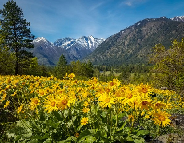 May - Wildflowers over the Icicle Valley